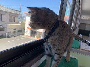 お外を見る猫ちゃん