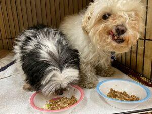 お食事中の犬ちゃん達。