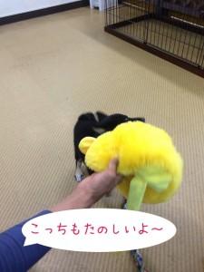 このおもちゃはどう?