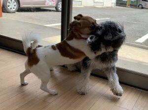 犬ちゃん捕まえたー