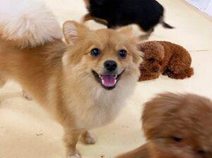 にこにこ笑顔の犬ちゃん。