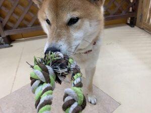 犬ちゃんお遊びしましょう