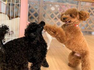 一緒に遊んでほしい犬ちゃん。